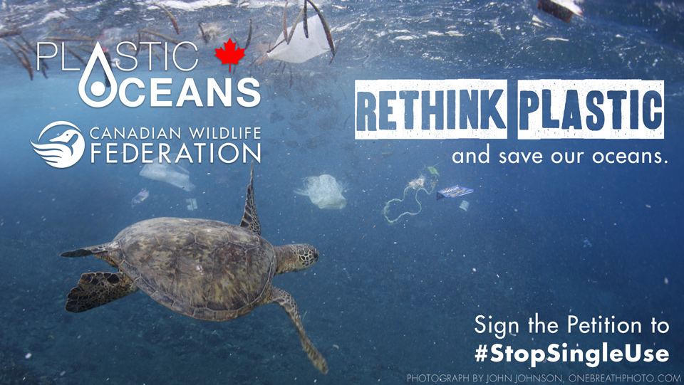 Plastic Oceans Foundation joins forces with the Canadian Wildlife Federation