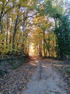 Forest path in the Catalonian region of Spain.