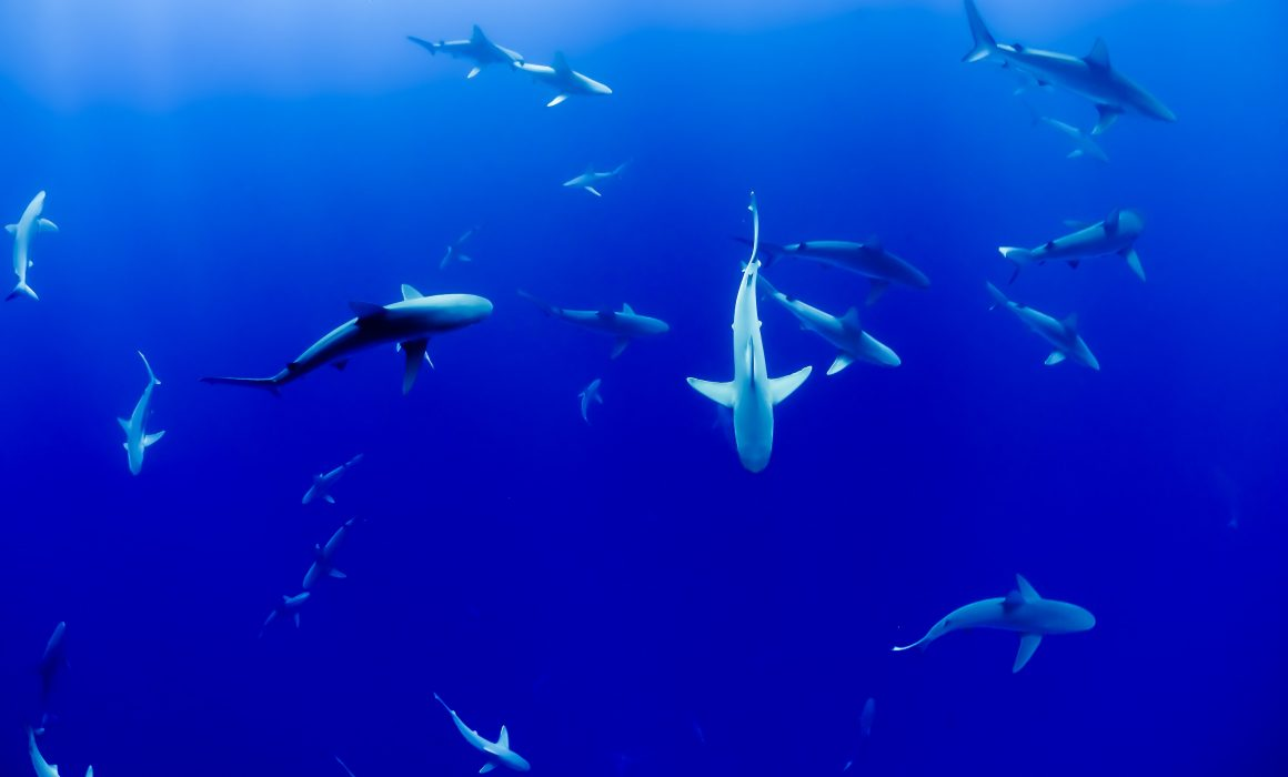 Sharks in the Ocean. Photo by Jakob Owens