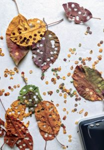 Leaf confetti from Living Without Plastic