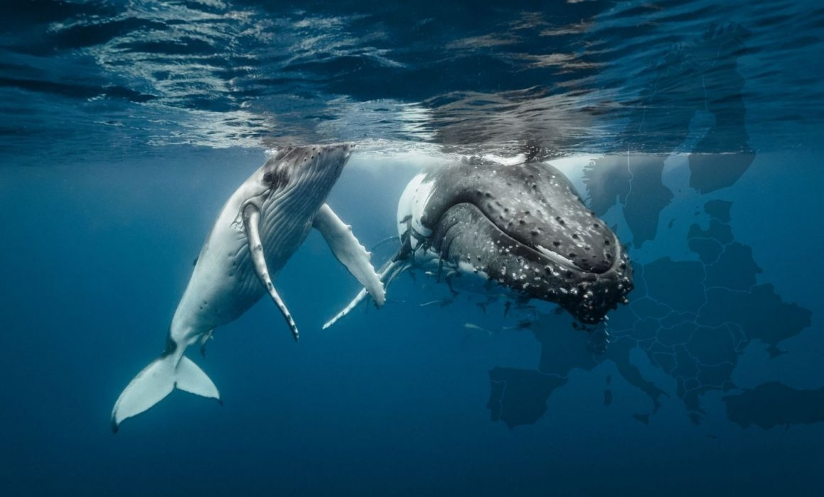 Whales over Europe